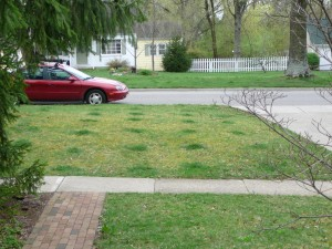 front_yard